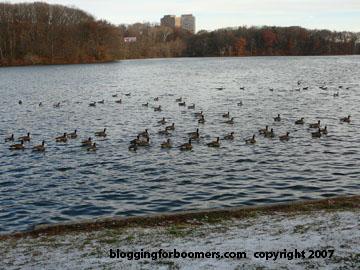 birds1-post.jpg